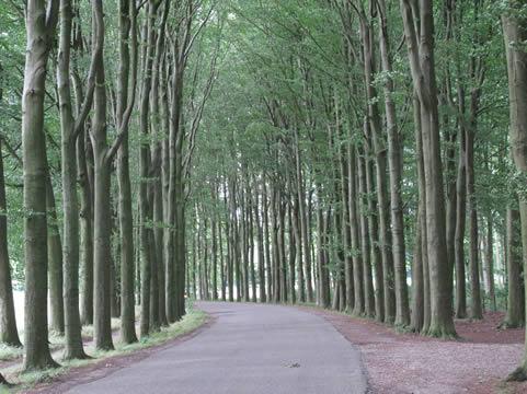 Bomenlaan landgoed Biljoen